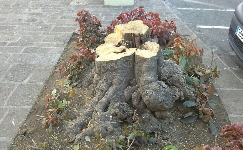 USP denuncia la tala de siete árboles de la plaza del Quiosco sin esperar a un informe independiente