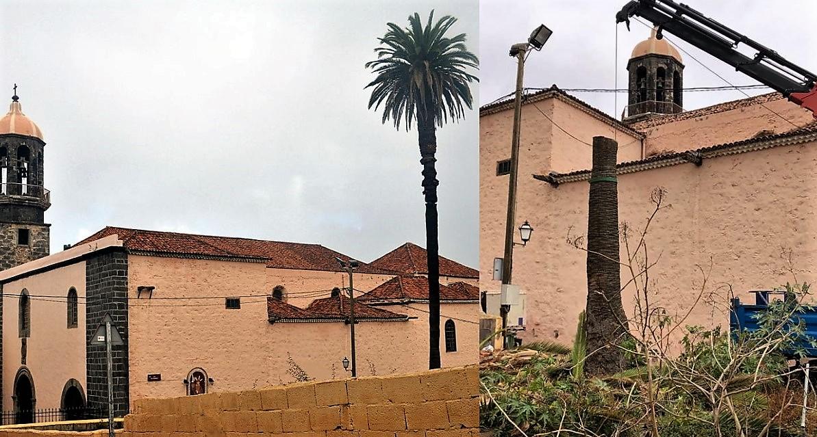 Se denuncia oficialmente la tala de la palmera de Santo Domingo