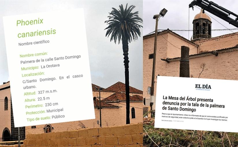 Asamblea por La Orotava acusa al grupo de gobierno de La Orotava de dejar morir a su séptimo ejemplar de Phoenix canariensis y apoya la denuncia de La Mesa del Árbol
